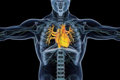 Ressonância magnética cardíaca: descubra para que serve e sua importância no check-up cardiológico!