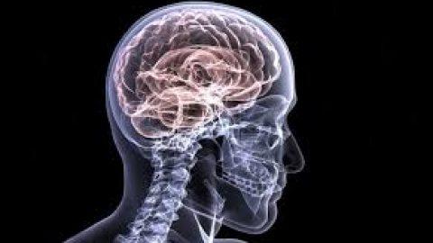 Estudo identifica processos cerebrais que ajudam no tratamento do Alzheimer