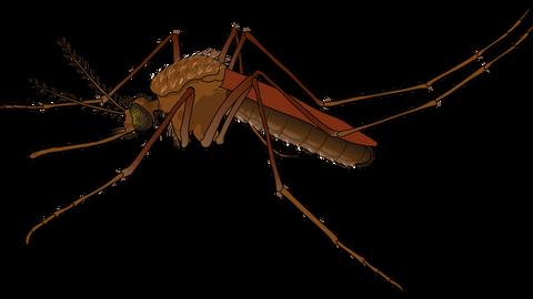 Ciência acelera e começa a desvendar segredos do zika