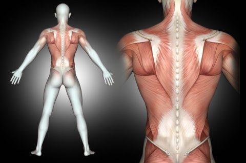 Densitometria: o melhor método para avaliar a massa muscular!